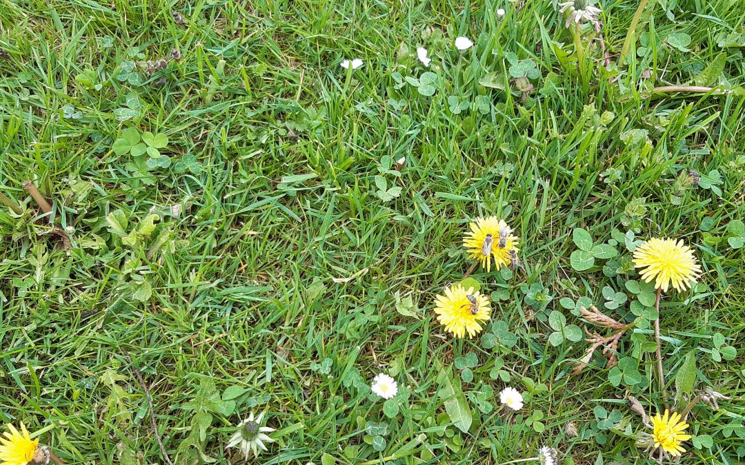 VIDEO – bezletné, zesláblé, nemocné, pochodující včely v trávě