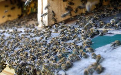 Co včele škodí?