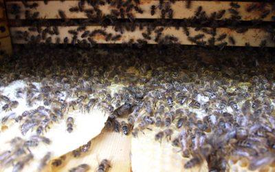 Jarní práce se včelstvy